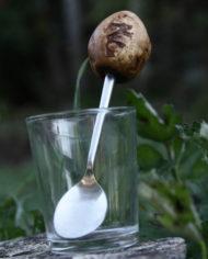 Baumperlenlöffel 2