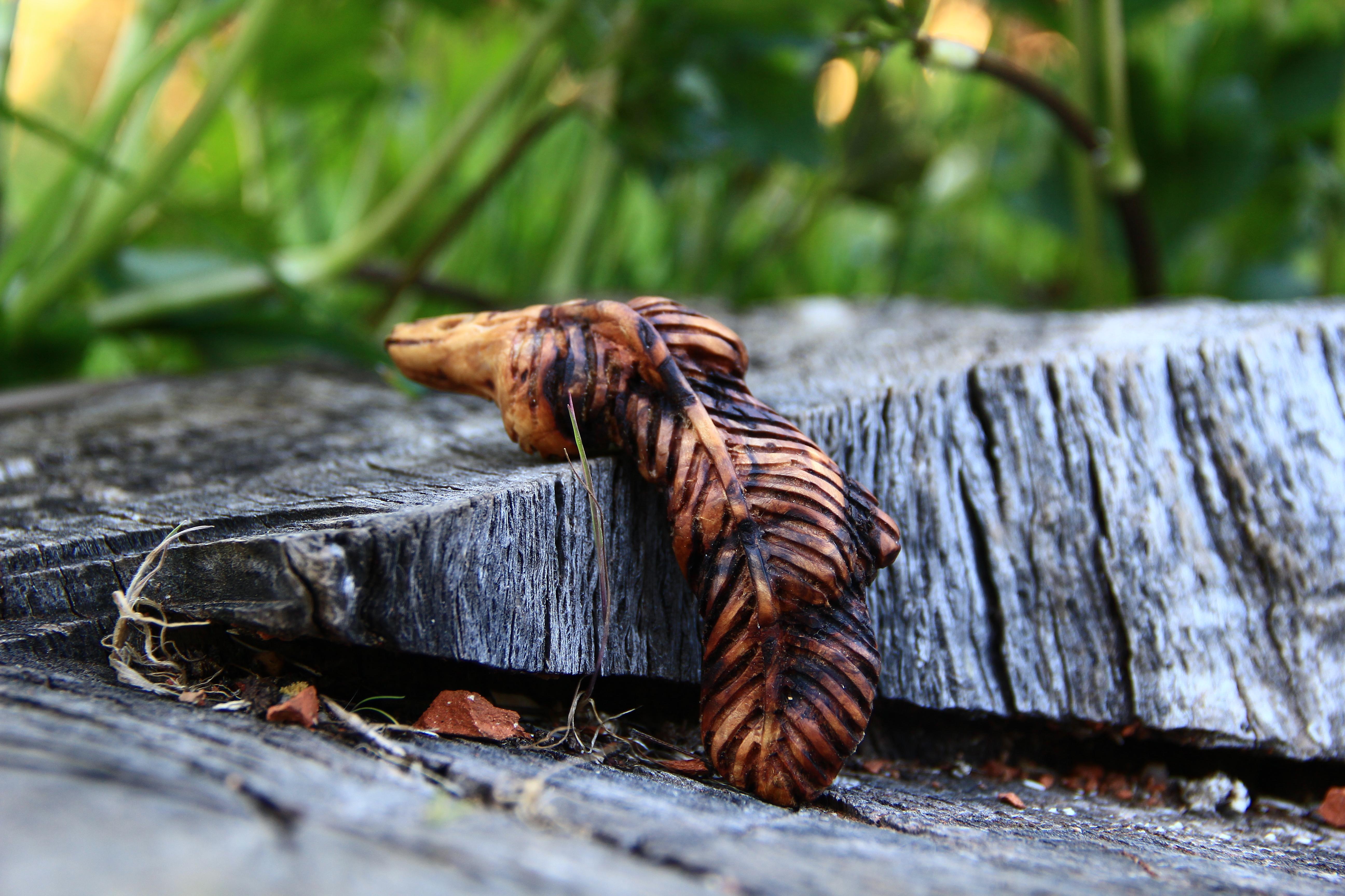 Baumperlen Federkette