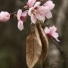 Federohrringe aus Baumperle