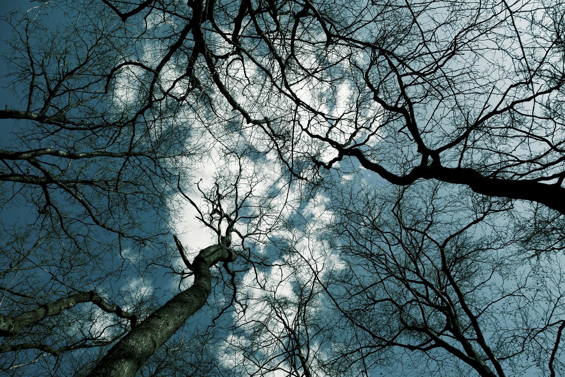 Baumperlen im Winter ernten oder nicht?