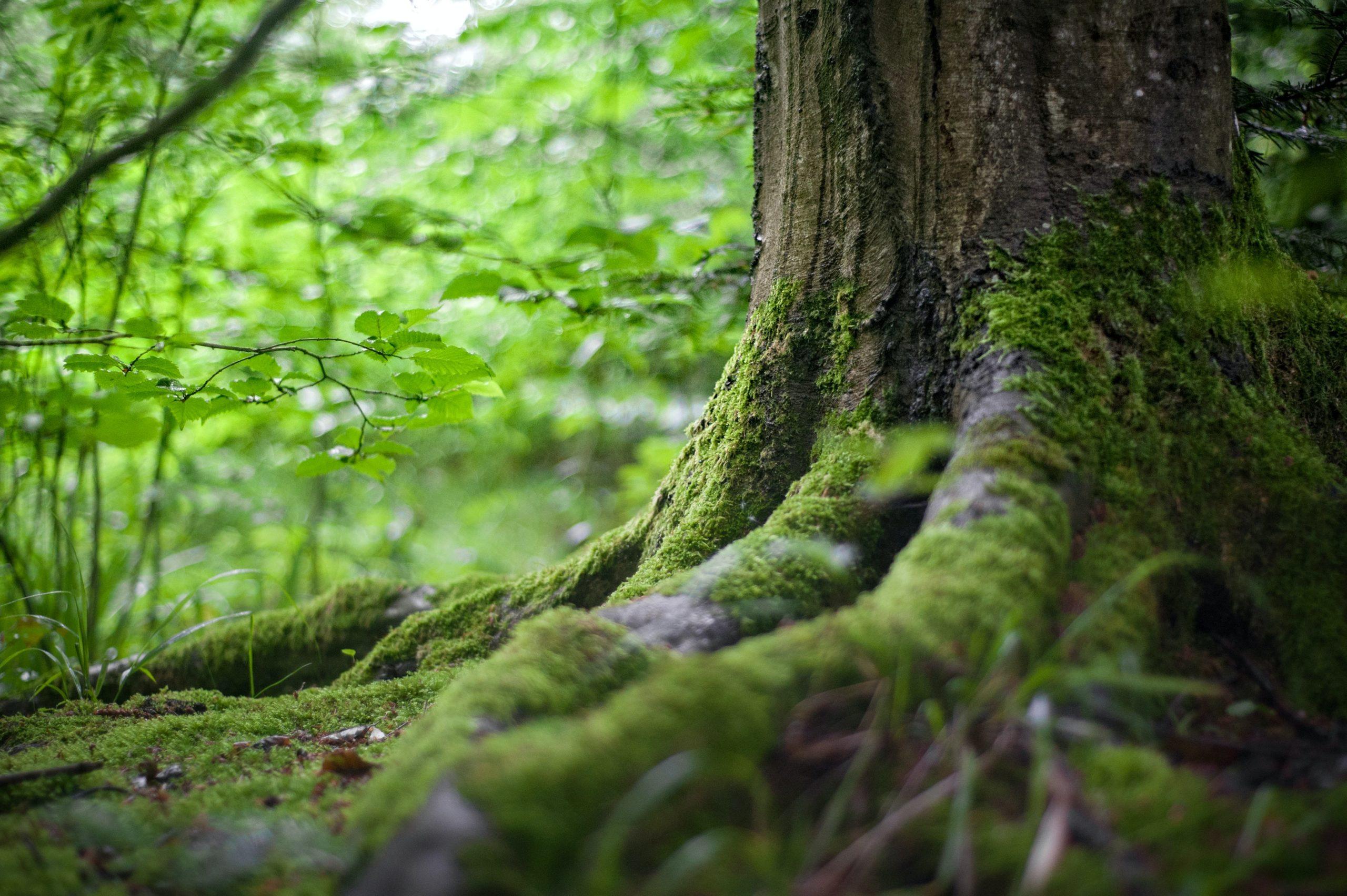 5 Tipps Baumperlen zu finden